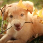 Is a Labrador puppy right for me