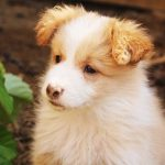 Puppy vaccinations and training