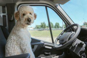 Puppy training puppy car sickness