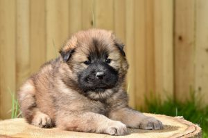 puppy training and socialising your puppy