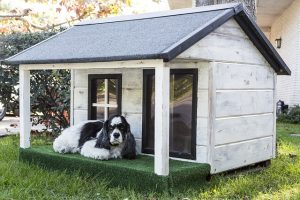 Which dog house is best