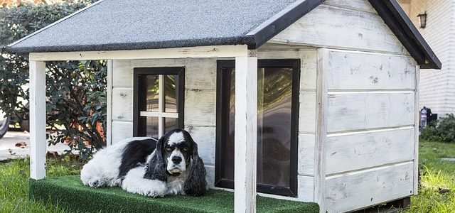 Are Plastic Dog Houses Better than Wooden Ones?