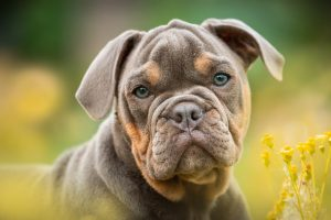 puppies training and health
