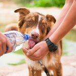 puppy training in summer