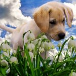Plants toxic to puppies