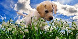 Plants toxic to puppies