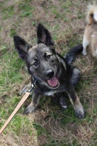 lead training puppy